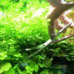 水草の手入れをしよう!熱帯魚の飼育に役立つ水草の知識