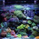 サンゴ水槽のレイアウト|3つのポイント