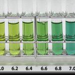 アクアリウムは水づくり|水草水槽では水草が好む水質にしよう