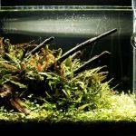 水槽レイアウトレシピ03|流木小型水槽の立ち上げ