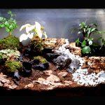 自室に箱庭を作ろう!爬虫類や両生類が育てれるビバリウムの作り方!
