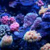 初心者がサンゴ水槽を作るには?種類やレイアウトを見てみよう