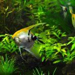 初心者向けの熱帯魚6種を厳選!