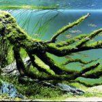 世界水草レイアウトコンテスト2016の受賞作品が異次元の世界