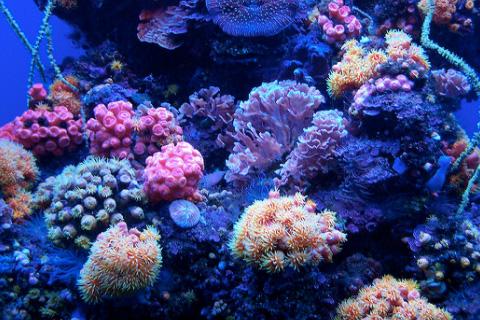 種類 サンゴ 珊瑚の種類と色
