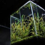 水槽レイアウトレシピ04|小型ジャングル水槽をつくる