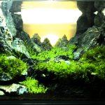 水槽レイアウトレシピ08|朝日が昇る石組水槽をつくる