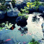誰でもできる!庭に池を作ってみよう!簡単な池作り!