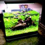 水槽レイアウトレシピ09|超小型水槽で水草水槽をつくる