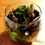 水槽レイアウトレシピ14|簡単!はじめてのコケリウム