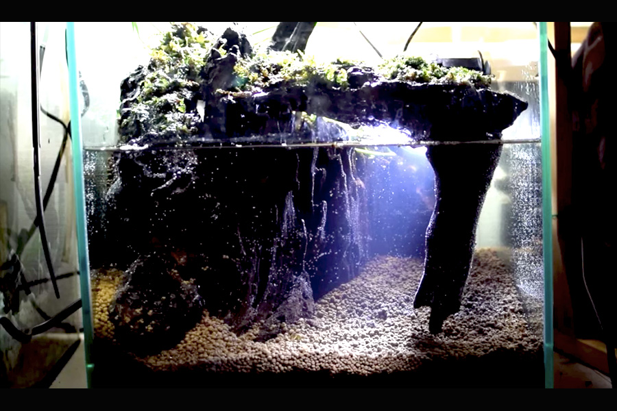 上げ 熱帯魚 水槽 立ち