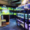 東京都内の熱帯魚専門店10選